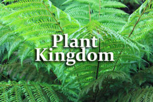 Plant Kingdom Questions and Answers